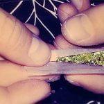 Cannabis. Uno Stato spacciatore? Borsellino avrebbe detto no