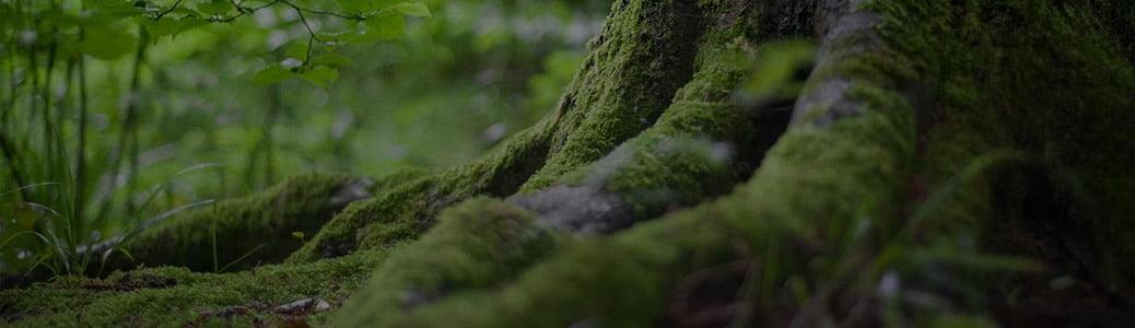 Sinodo sull'Amazzonia, radici